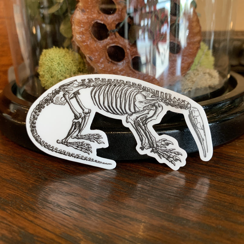 Skeleton Stickers - Curious Nature