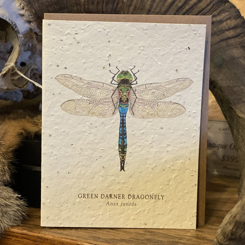 Seed Paper Greeting Card - Curious Nature