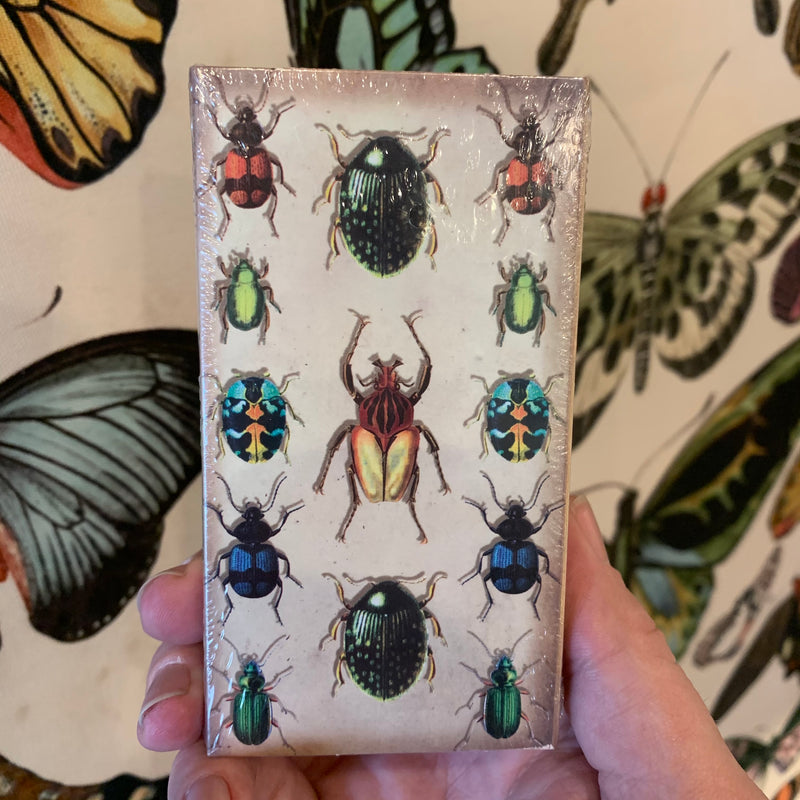 Insect Matchbox