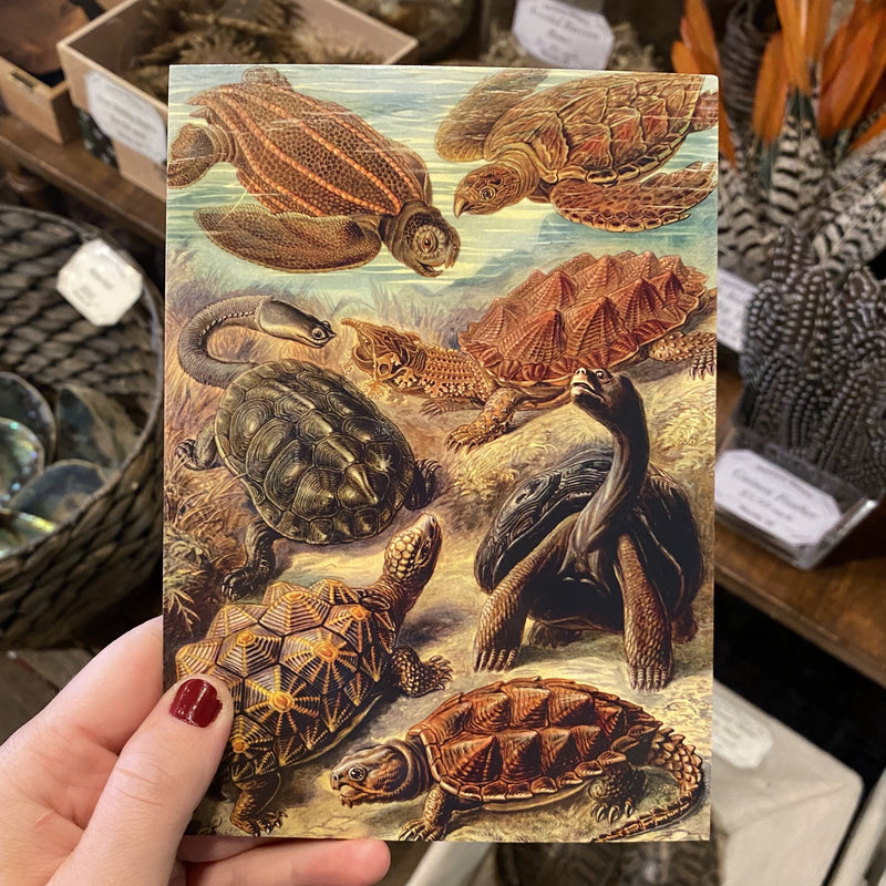 Antique Design Postcards - Curious Nature