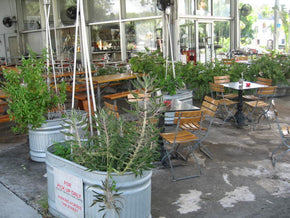Out Door Garden Pizza Restaurant  Outdoor Dining - Tamirson