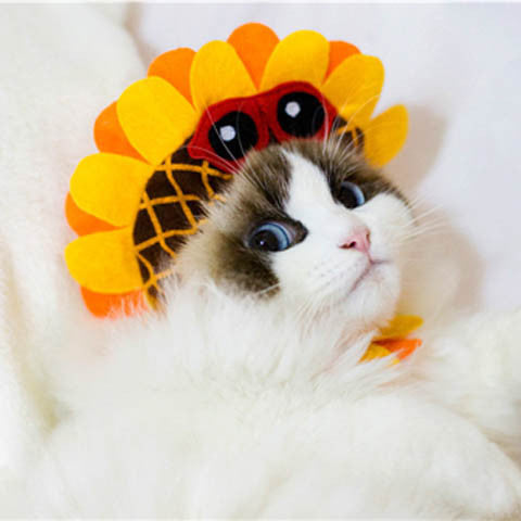 New Fashion Sunflower Soft Cat Hat