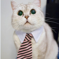 Adjustable Cat Tie Color Random