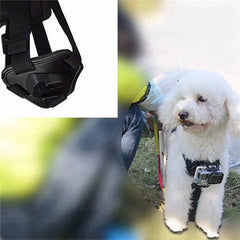 Pet Dog Harness Chest Strap - BoardwalkBuy - 6
