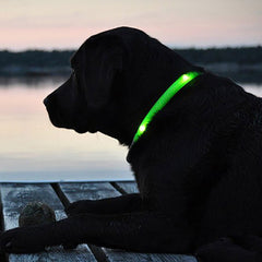 LED Dog Collar - Assorted Colors and Sizes - BoardwalkBuy - 2