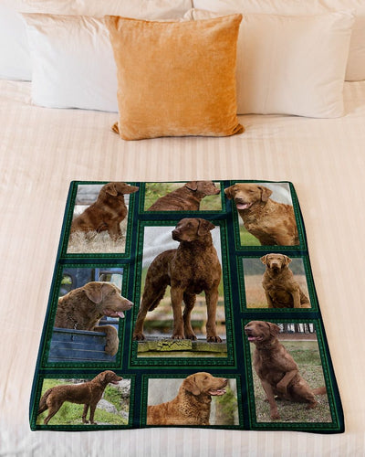 Chesapeake Bay Retriever GS-CL-ML1211