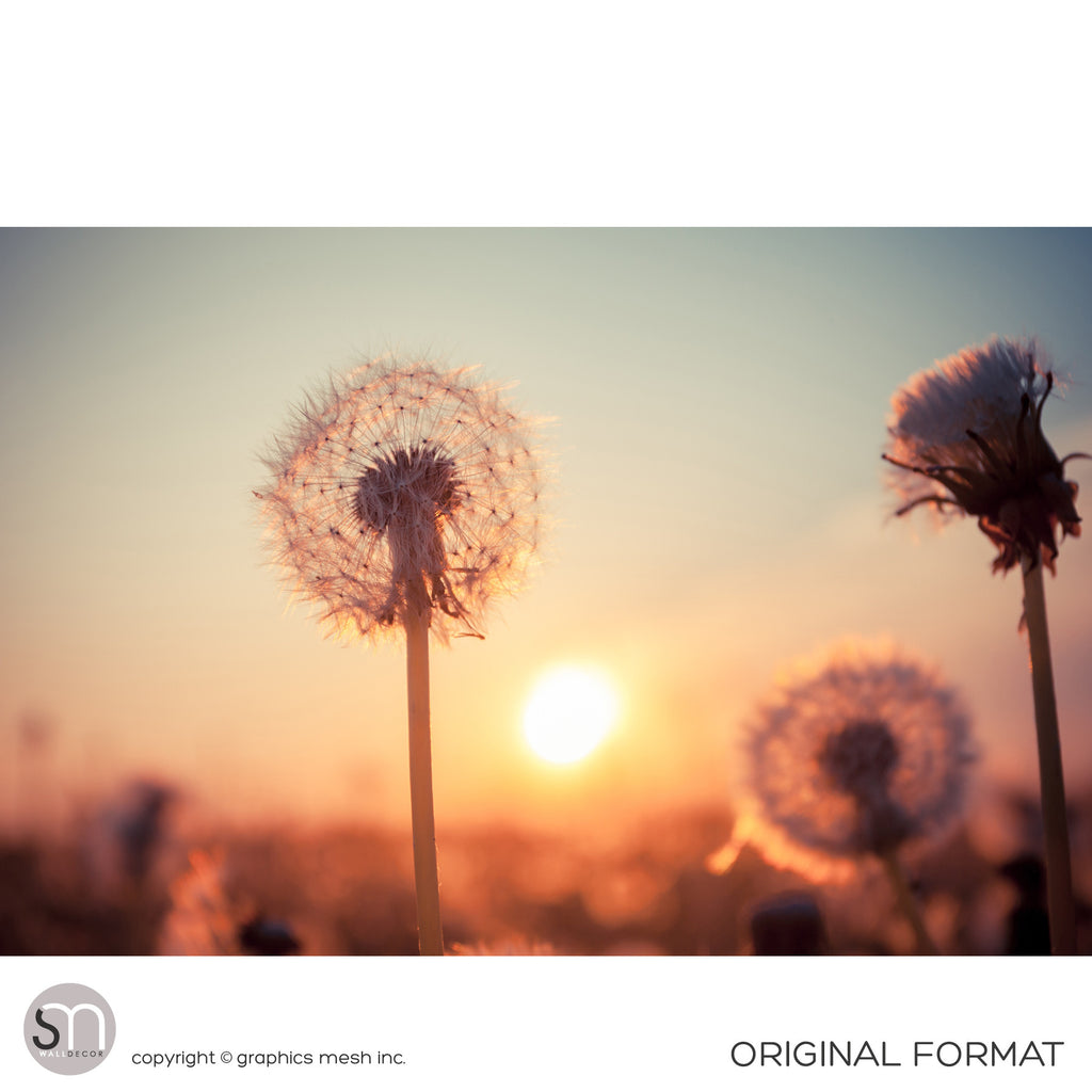 DANDELIONS AT SUNSET - Nature Wall Mural original
