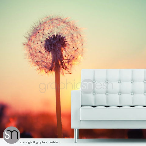 DANDELIONS AT SUNSET - Nature Wall Mural