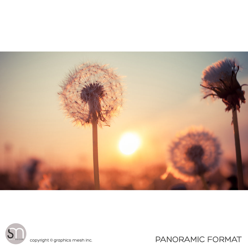 DANDELIONS AT SUNSET - Nature Wall Mural panoramic