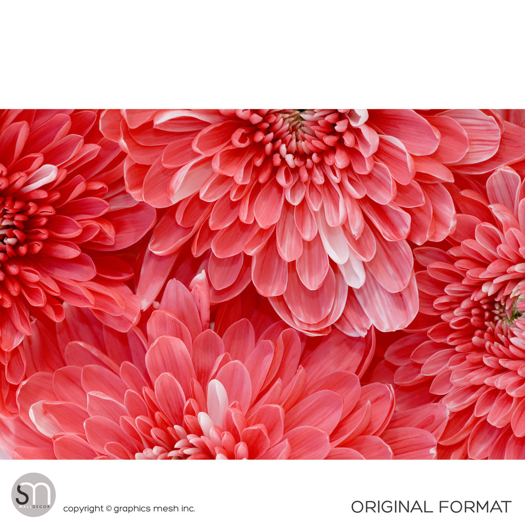 RED FLOWER CLOSEUP - Wall Mural original