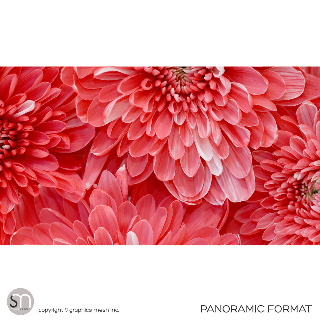 RED FLOWER CLOSEUP - Wall Mural panoramic