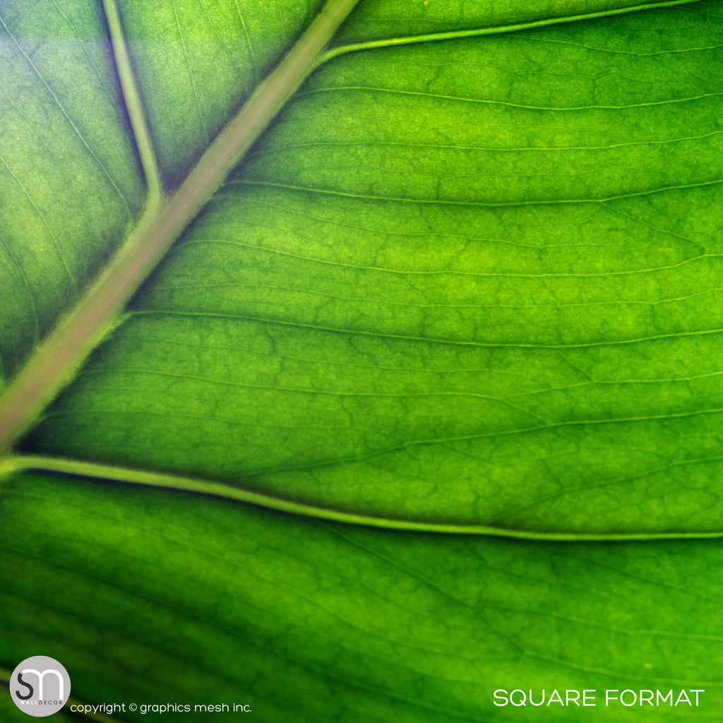 Green leaf wall mural square view