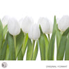 WHITE TULIPS - Nature Wall Mural original