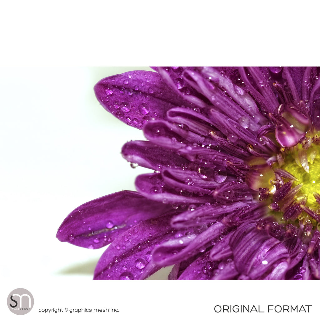 PURPLE FLOWER CLOSEUP - Wall Mural original