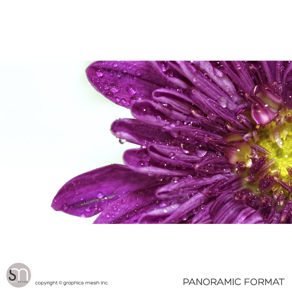 PURPLE FLOWER CLOSEUP - Wall Mural panaromic