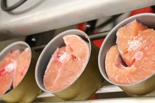 Salmon in canning process