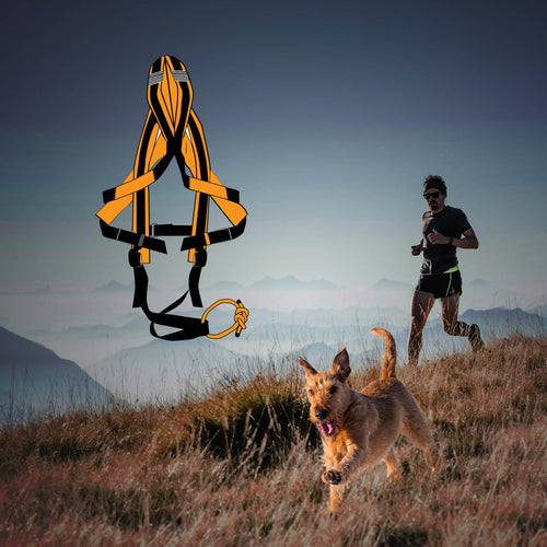 Trail running, road running, cross country running.. when your dog just wants to run, GOTO1 harnesses is the choice.