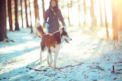 Woman walking her dog in a snowy forest