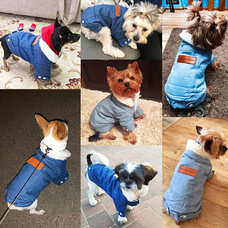 Luxury Winter Dog Jacket - HiPawsy