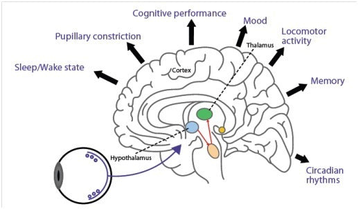 Effects on the brain from blue light