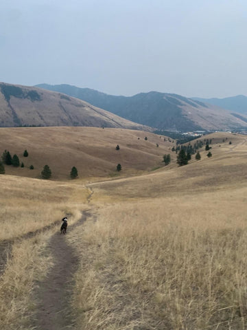 Caterpy Explores Cherry Gulch