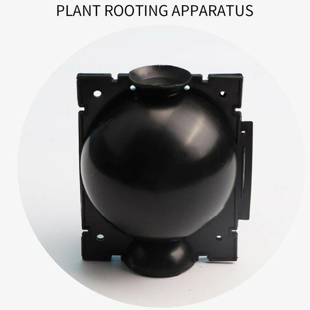 Plant Root Growing Box - 5pcs