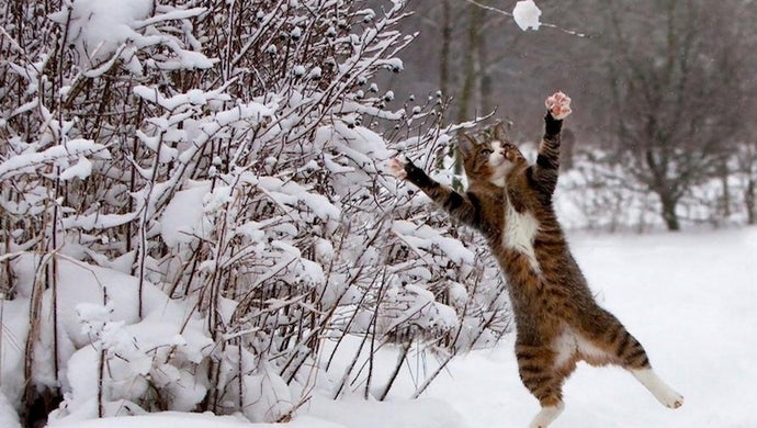 Winter Wonderings: Prepping Your Furkids for the Cold Ahead