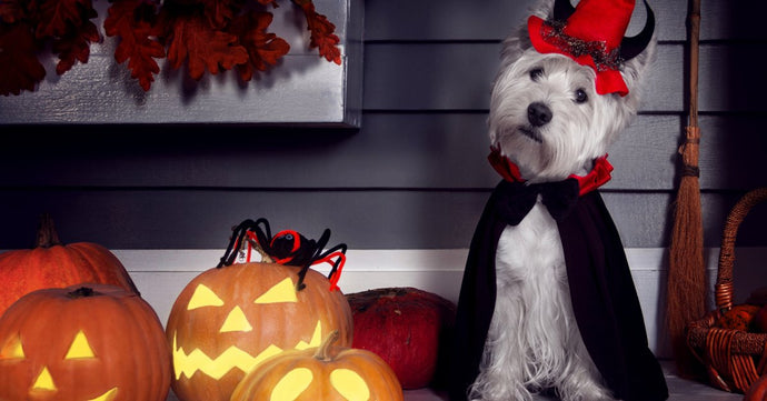 Is it Inhumane to Dress Up your Pets for Halloween (or Any Occassions)?