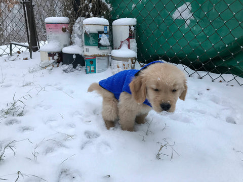 Dog Pooping in Winter