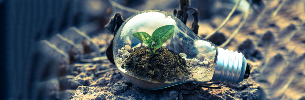 A glass lightbulb with soil and a little plant inside. Our Mission by Ethical Swag