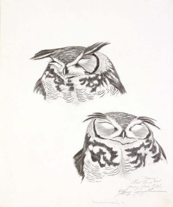 Tony Angell Artwork 'Great Horned Owl Sleeping' | Available at fosterwhite.com