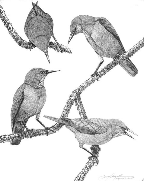 Tony Angell Artwork 'Pinyon Jays' | Available at fosterwhite.com