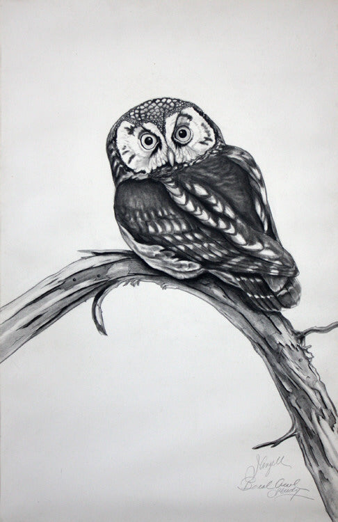 Tony Angell Artwork 'Boreal Owl Study' | Available at fosterwhite.com