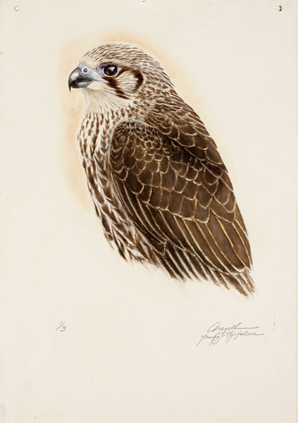 Tony Angell Artwork 'Young Gyrfalcon, 1/24' | Available at fosterwhite.com
