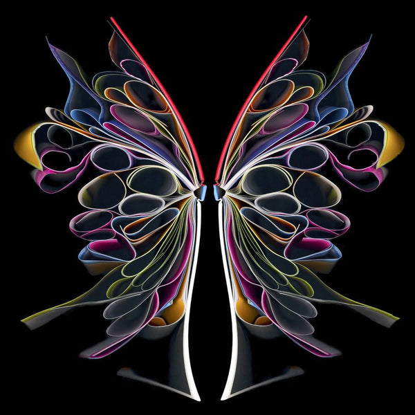 Cara Barer - Butterfly II - 24x24 in. Archival Pigment Print Mounted on Archival Substrate, Framed in Black with Plexiglass, - Foster White Gallery