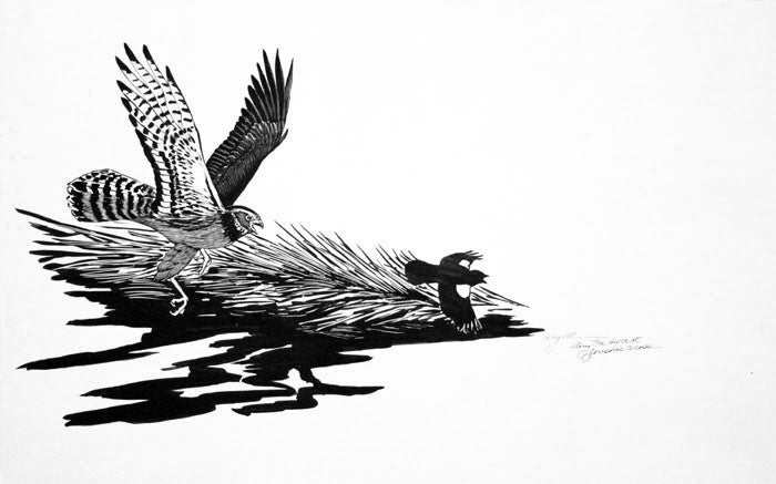 Tony Angell Artwork 'Young Marsh Hawk Pursuing Red Wing' | Available at fosterwhite.com