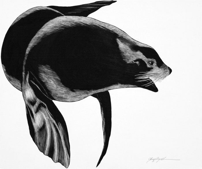 Tony Angell Artwork 'Northern Sea Lion' | Available at fosterwhite.com