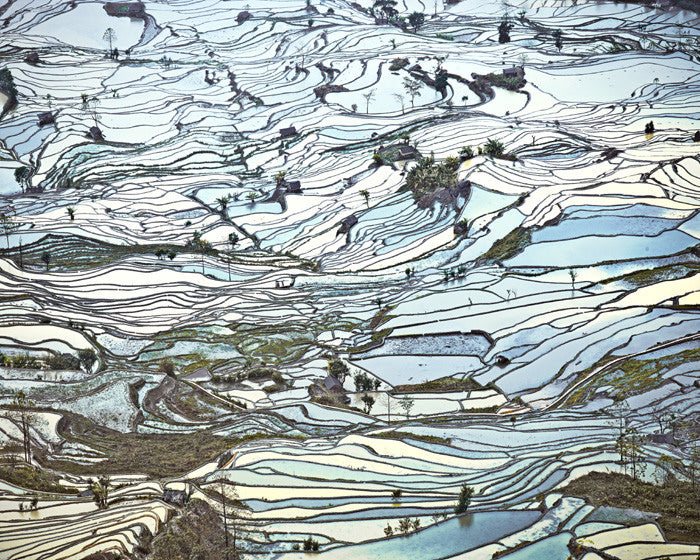 David Burdeny Artwork 'Rice Terraces, (Laohuzui II), Yunnan, China' | Available at fosterwhite.com