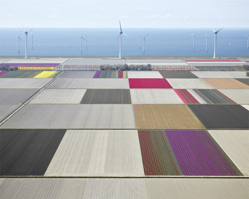 David Burdeny Artwork 'Tulips And Turbines 1, Noordoostpolder, The Netherlands' | Available at fosterwhite.com