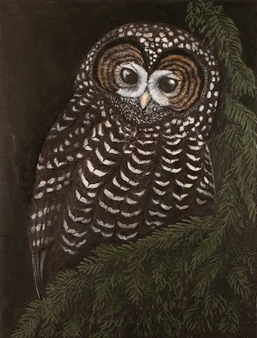 Ancient Forest Spotted Owl