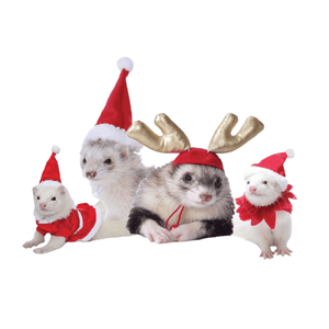 Holiday Safety Tips For Your Ferrets