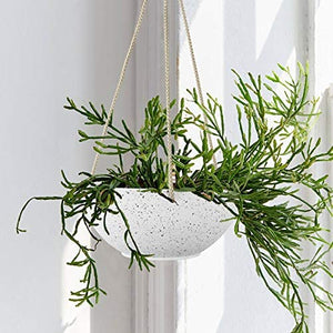"White Hanging Planter Basket - 8"" Set of 2 - Lucia Gardens"