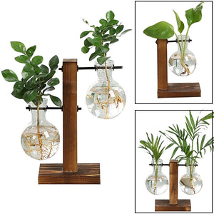 Hydroponic Plant Vases / Propagation Station - Lucia Gardens