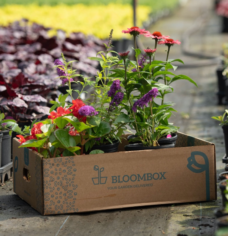 open top BloomBox box full of native plants