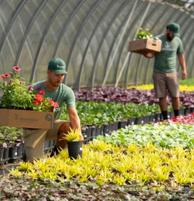 overview of local greenhouse with BloomBox employees selecting plants
