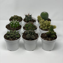 Load image into Gallery viewer, 3-piece Assorted Cactus Set