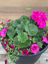 Load image into Gallery viewer, 'Summer Planter' - Black