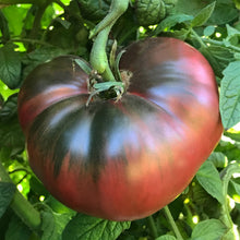 Load image into Gallery viewer, Tomato 'Cherokee Purple'