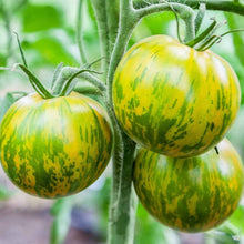 Load image into Gallery viewer, Tomato 'Green Zebra'