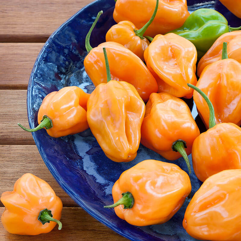 Pepper 'Habanero Orange'